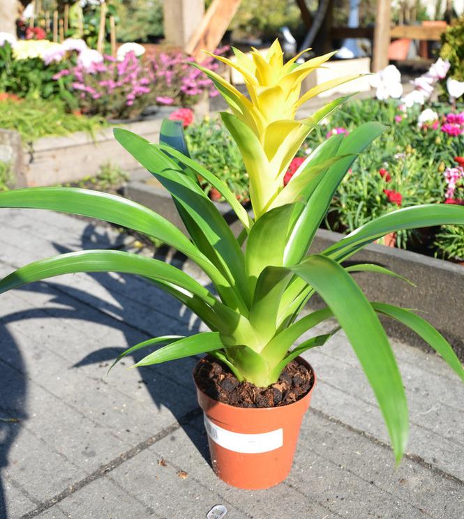Голландский цветочный аукцион FloraHolland 9
